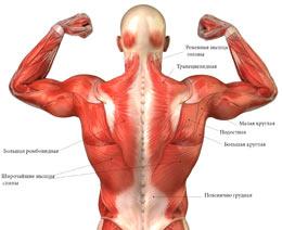 Боль в желудке вверху отдающая в спину