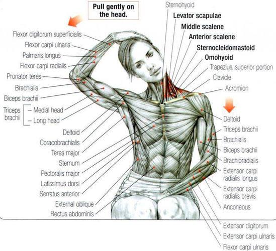 психосоматика спазмы мышц
